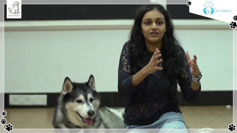 Bark N Bond: Social Experiment Film by WATConsult Mumbai