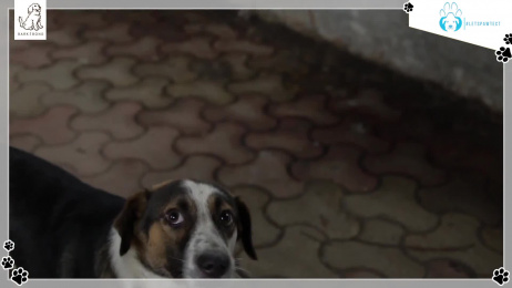 Bark N Bond: A Conversation With Pranita Balar, Founder and Bark N Bond Film by WATConsult Mumbai