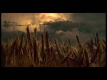 Zlaty Bazant: Повторения в природе (Из золота солода) Film by Znamenka