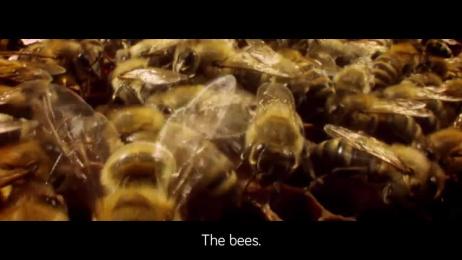 Darbo: Signed by bees Film by Demner, Merlicek & Bergmann, VIE Film