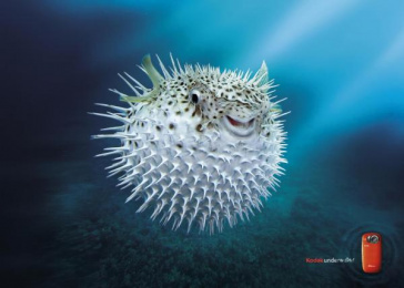 PLAYSPORT UNDERWATER CAMERA: PUFFER Print Ad by Ogilvy & Mather London