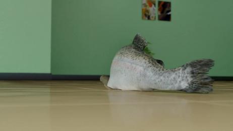 Klarna: The Fish Film by DDB Stockholm, MJZ