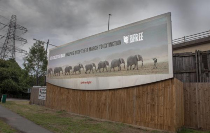 Born Free Foundation: World Elephant Day, 2 Outdoor Advert by WCRS