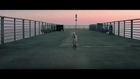 Audi: Strelka's legacy Film by Blur, DDB Madrid, DDB Paris