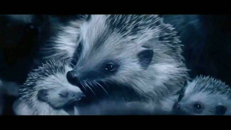 Volkswagen: Hedgehogs Film by Akama Studio, V Agency Paris, Wanda Productions