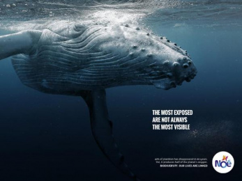 Noe Conservation: Humpback Whale Print Ad by Fred & Farid Paris