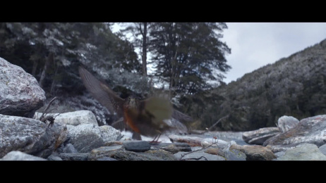 Waitrose: Home For Christmas Film by adam&eveDDB London, Rogue Films, The Mill