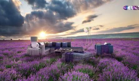 Glade: Living room freshener Print Ad by Lapiz de Bits Bogotá