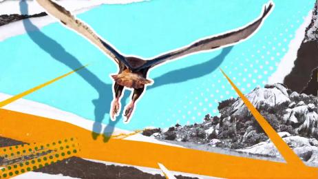 San Diego Zoo: Kopje Film by Gentleman Scholar, M&C Saatchi Los Angeles