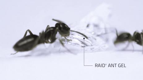 Raid: Cake Film by Energy BBDO Chicago, WhizBang
