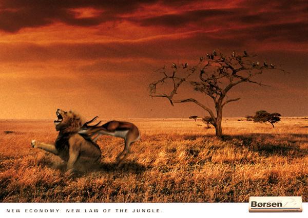 LION KILLED