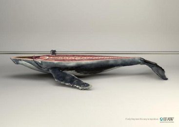 Ifaw/international Fund Of Animal Welfare: Whale Print Ad by Y&R Paris