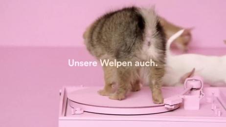 Spotify: Puppies Film by Neverest, Serviceplan Munich