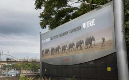 Born Free Foundation: World Elephant Day, 3 Outdoor Advert by WCRS