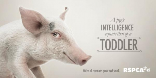 RSPCA QLD: We're all creatures great & small - Pig [alternative version] Print Ad by The Engine Group