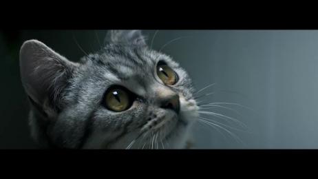 Whiskas: Drip Film by AMV BBDO London, Knucklehead