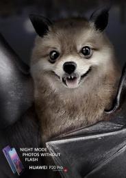 Huawei: Bat Print Ad by GForce/Grey Almaty