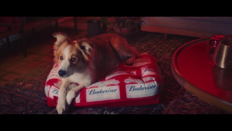 Budweiser: NBA - Pets Film by Africa Sao Paulo, Stink