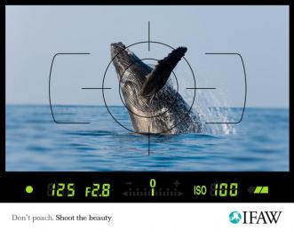 Ifaw: Anti-poaching, Whale Print Ad by Scanad Kenya