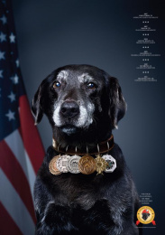 National Disaster Search Dog Foundation: Jake Print Ad by Y&R New York