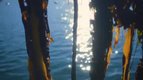 Lidl: My Lidl Job, 3 Film by TBWA\ London
