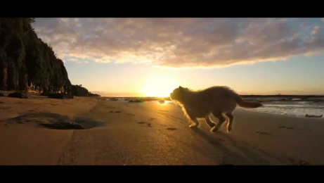 YuMOVE: A Love Letter to Dogs Film by Dog Cat & Mouse