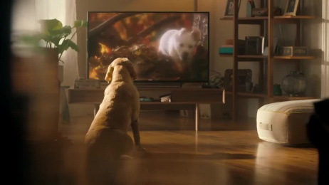 Andrex: 75th Film by J. Walter Thompson London