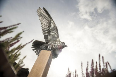 IKEA: Allen the Peregrine, 7 Outdoor Advert by Mother London
