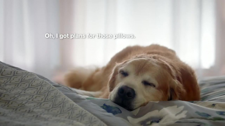 Kmart: Dog Film by Havas Worldwide Chicago, m ss ing p eces