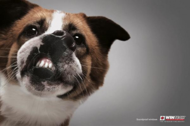Wintech: Dog Print Ad by JWT Hyderabad