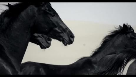 BMW M5: Black Horse Film by Jung Von Matt Germany, Markenfilm