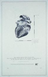 David Cup Tennis: HEART Print Ad by Fallon Mcelligott