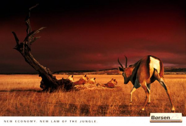 Borsen: LION ATTACKED Print Ad by Umwelt