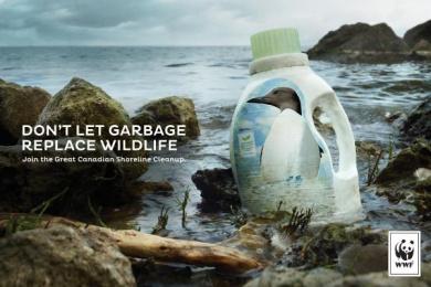 WWF: Murre Print Ad by Traffik