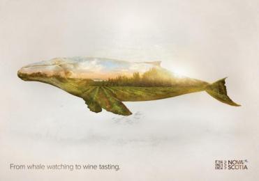 Nova Scotia Tourism: Whale Print Ad by DDB Toronto