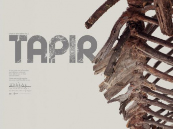 Natural History Museum/ NHM: Deforested Bones - Tapir Print Ad by Havas Creative Columbia