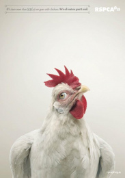 RSPCA QLD: We're all creatures great & small - Chicken Print Ad by The Engine Group