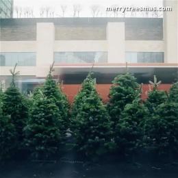 Treepex: Burned Christmas Trees Digital Advert by Leavingstone Tbilisi