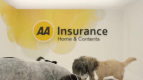 AA Insurance: Puppies Film by DDB Auckland, Scoundrel