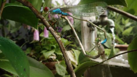 Hornbach: Biodiversity starts in your garden. Film by Czar, Heimat Berlin
