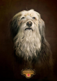 Pedigree: Rags Print Ad by Colenso BBDO Auckland