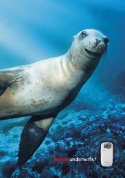 PLAYSPORT UNDERWATER CAMERA: SEAL [alternative version] Print Ad by Ogilvy & Mather London