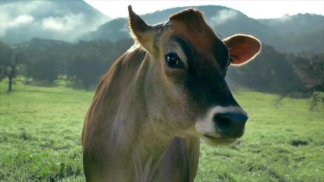 Promised Land Dairy: Meet Mildred Film by Publicis Hawkeye