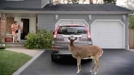 TriHonda: Deer Film by Hungry Man, Publicis Kaplan Thaler New York