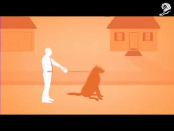 Woodland Park Zoo: ZOO DINO FAMILY DOG Film by Wong