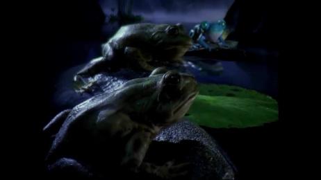 Bud Light: Bud Light Frogs Film by mcgarrybowen London
