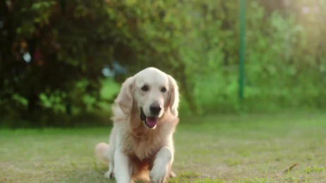 Reliance General Insurance: The Running Dog Film by Absolute Films, Ogilvy & Mather Mumbai