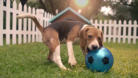 Reliance General Insurance: Dog and the Ball Film by Absolute Films, Ogilvy & Mather Mumbai