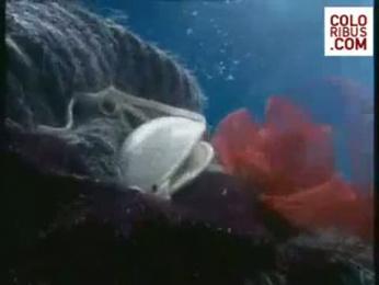 Ariston Aqualtis Washing Machine: UNDERWATER WORLD Film by Leo Burnett Milan