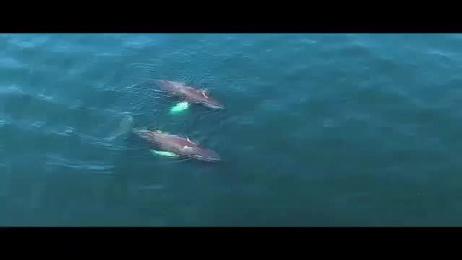 Boston Harbor Cruises: Brand Film by RATTLE Boston, Stellwagen Media